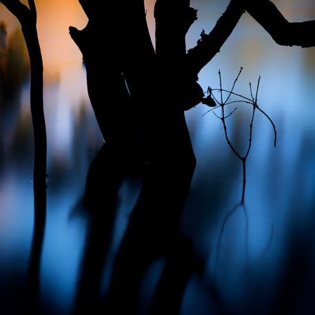 Mangroves II
